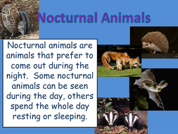 Powerpoint of Nocturnal Animals