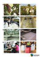 journey_of_cotton_pictures.pdf