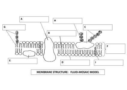 Cell Membranes 'Wheel of Fortune' - 17.1KB