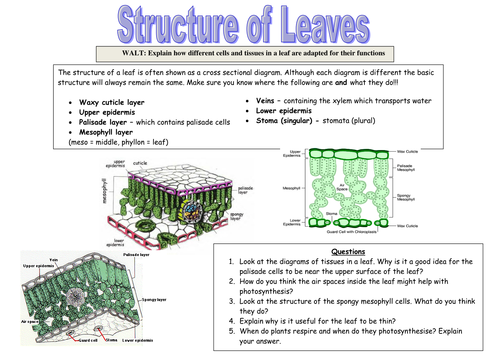 Leaves powerpoint and worksheet by nicola3650 - Teaching Resources ...