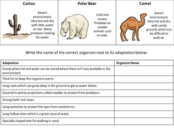 Printables Adaptations Worksheet adaptation worksheetrevision aid by hannahradford teaching adaption organisms pptx