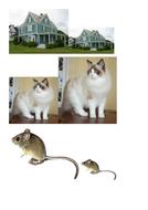 Great big images comparisons.doc