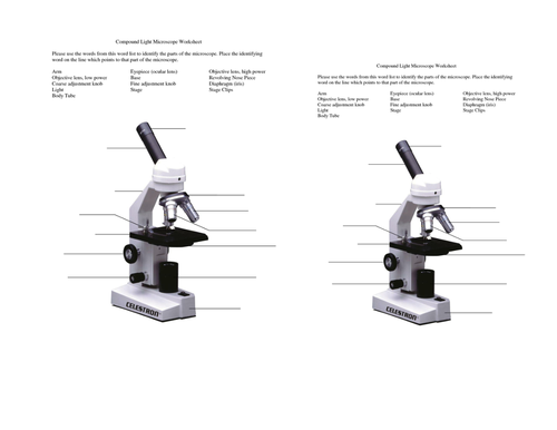 Cells unit by Masfar Teaching Resources TES – Parts of a Microscope Worksheet