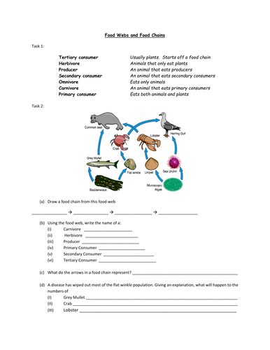 food webs and food chains worksheet by alexjfirth teaching resources tes. Black Bedroom Furniture Sets. Home Design Ideas