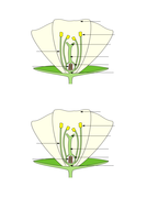 Worksheet labelling flower parts ppt by yoconnor93 teaching worksheet labelling flower parts ppt ccuart Gallery