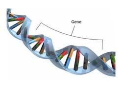 xmen selective breeding presentation.pptx