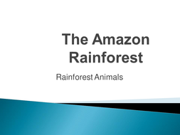 the amazon rainforest powerpoint by emmer88beetle teaching