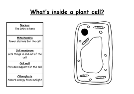 Animal and plant cells by fiendishlyclever teaching resources tes animal and plant cells ccuart Image collections