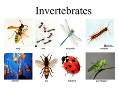 invertebrates vertebrates by mrsbourdon teaching resources tes