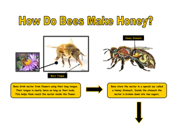 Example of an explanation diagram - bees & honey