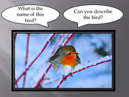 animals in winter powerpoint by ruthbentham teaching resources tes