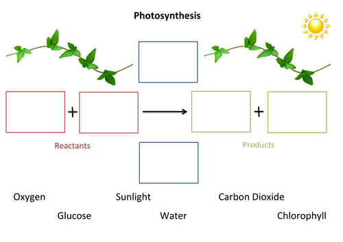 Photosynthesis Fill In The Gaps By Susiejay Teaching