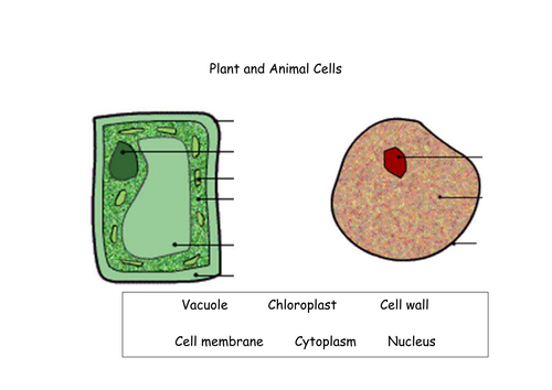 Plant and Animal Cells | Teaching Resources