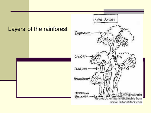 Worksheets Layers Of The Rainforest Worksheet rainforest layers by claire494 teaching resources tes