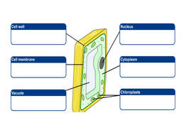 Cool Simple Plant Cell By Funforester Teaching Resources Wiring Database Denligelartorg