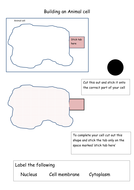 Building an animal cell.docx