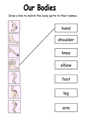 Our Bodies worksheet   Teaching Resources