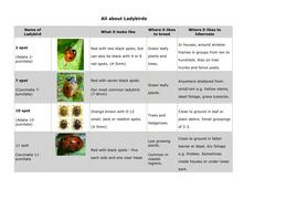 Ladybird Lifecycle.doc