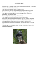 Information Pages on Animals for Group Research.docx