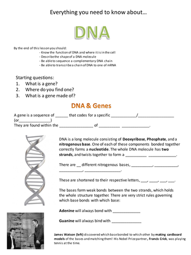 DNA & Base Pairing by swhuntergordon - Teaching Resources ...