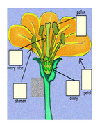 Blank sheet for dissecting flower