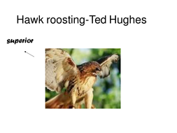 ted hughes hawk roosting essay Stylistic devices in hawk roosting by ted hughes essay sample the hawk roosting poem is a very interesting, and distinctive description of the world of a hawk even though the hawk is described in an imposing way, it still has raw aggression, and horrible descriptions of killing, and power.