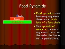 food pyramids ppt by raj nandhra teaching resources tes