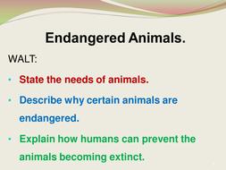 endangered animals 8n5.pptx