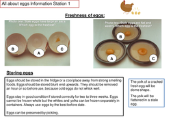 INFORMATION STATIONS EGGS(1).pptx