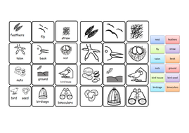 More stuff all about birds Flashcards