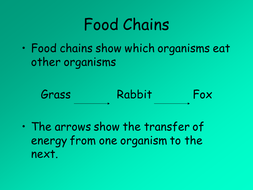 P3 Food Web and Chains presentation.ppt