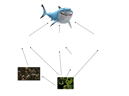 Food Chain And Food Web By Andrewbaker88 Teaching