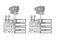 worksheet interactive whiteboard soil profile 38 kb microsoft word. Black Bedroom Furniture Sets. Home Design Ideas