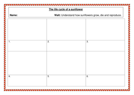 The life cycle of a sunflower by misselven - Teaching Resources - Tes
