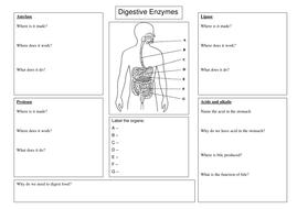 Free Worksheets For Kindergarten Sight Words Digestive Enzyme Worksheet By Spinkydoodle  Teaching Resources  Tes To Be Verb Worksheets with Phonics For Adults Worksheets Excel Digestive Enzyme Worksheetdocx Number Pattern Worksheets Pdf