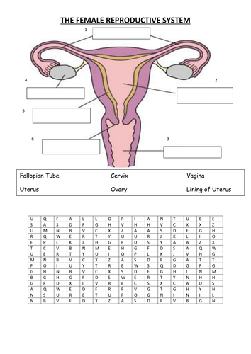 Worksheets Female Reproductive System Worksheet female reproductive system by vinnie254 teaching resources tes