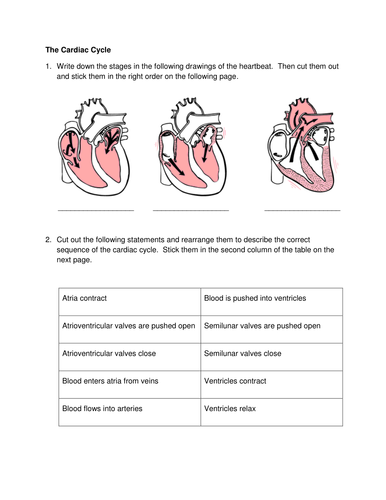 cardiac cycle worksheet wiildcreative. Black Bedroom Furniture Sets. Home Design Ideas