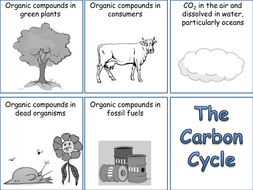 Carbon cycle card sort