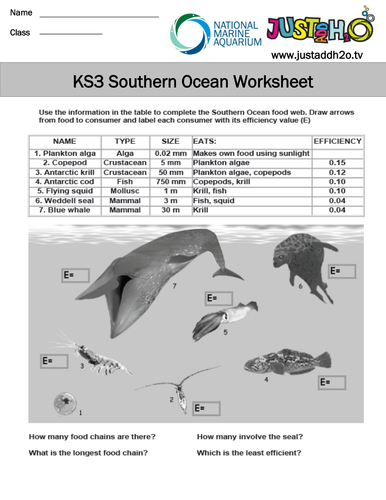 Converting Metric Measurements Worksheets Pdf Ks Ecosystems And Food Webs By Justaddh  Teaching Resources  Tes Sh Worksheets For First Grade Word with Surface Area Prisms Worksheet Excel  Add And Subtract Matrices Worksheet