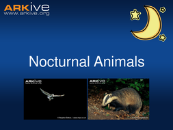 Nocturnal animals - 5-7 years - Classroom Presentation.ppt