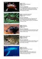 Endangered Species - 7-11 years - Activity Cards.doc