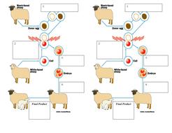 Cloning Animals Lesson