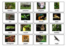 animal photos.pdf