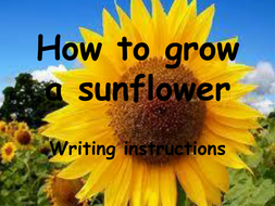 Instructional writing - how to grow a sunflower