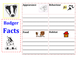 Nocturnal animals - Badger and Owl activities
