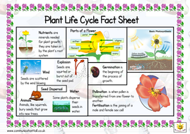 life cycle of a plant unit 5b resources by hanben123 teaching resources. Black Bedroom Furniture Sets. Home Design Ideas