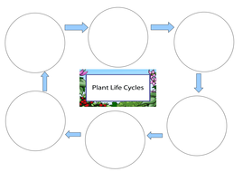 Life Cycle of a Plant Worksheet by pantobabe - Teaching Resources - Tes