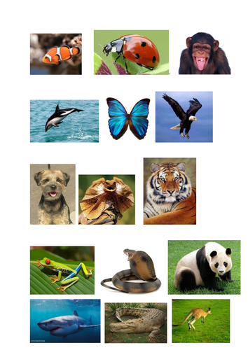 classifying animals worksheet and pictures by pantobabe teaching resources tes. Black Bedroom Furniture Sets. Home Design Ideas