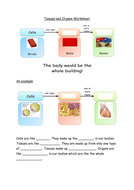 Tissues and Organs Worksheet.docx
