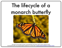 Make A Worksheet Online Pdf Lifecycle Of A Monarch Butterfly Printable Book By  Division Table Worksheet Word with Word Game Worksheets Pdf Lifecylemonarchbutterflypdf Dna Unit Review Worksheet